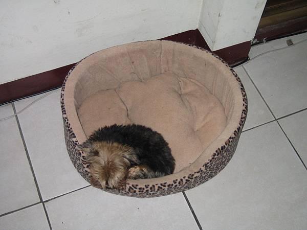 哪家的小狗子睡姿如此迷人~