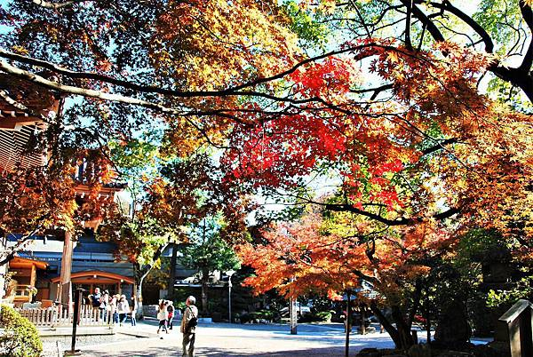 秋天的深大寺1.JPG