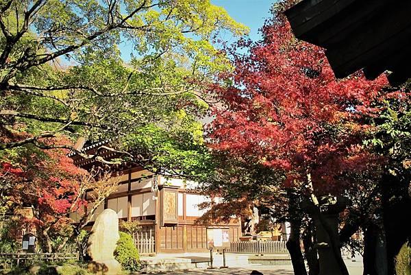 秋天的深大寺3.JPG