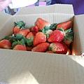 20120212大湖採草莓 134.jpg