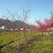 20120212大湖採草莓 135.jpg