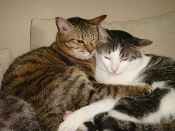 小妹和米香抱抱