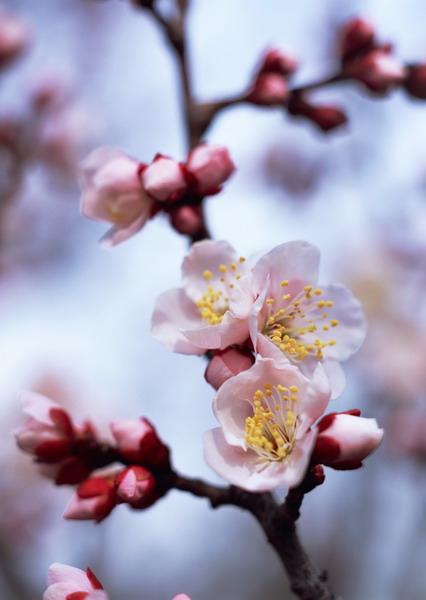 大阪城公園梅林1.jpg