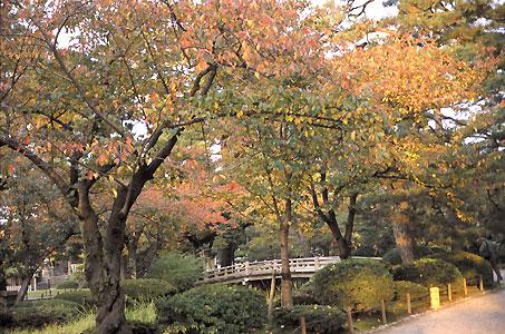 花見橋と紅葉.jpg
