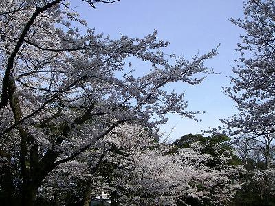 落花盛ん.jpg
