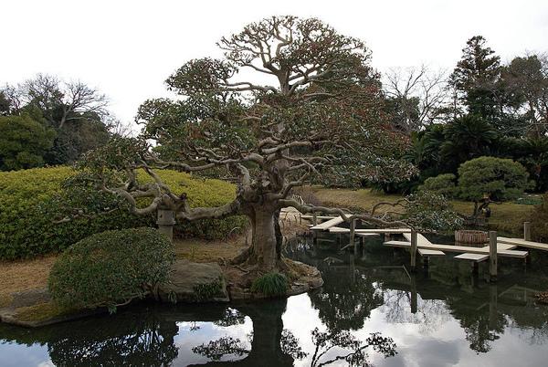 花交の池.jpg