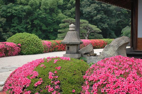 延養亭の軒先に咲くサツキ.JPG