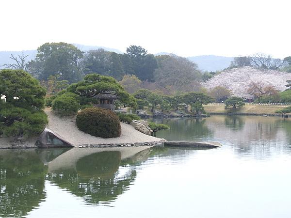 桜林2.JPG