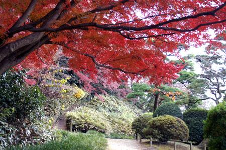 紅葉の七曲がりの上り口。右手には観梅詩碑がある。.jpg