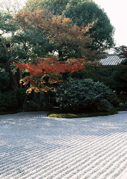 日本庭園-京都市東山区 圓徳院(11月).jpg