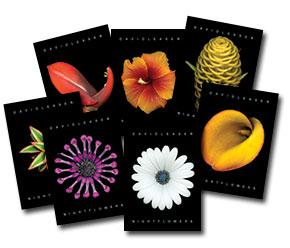 Postcard-grouping.jpg