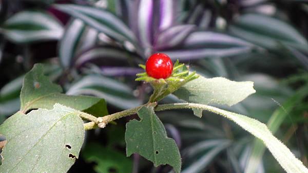 五里坡的美麗植物