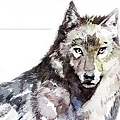 叢林之書wolf
