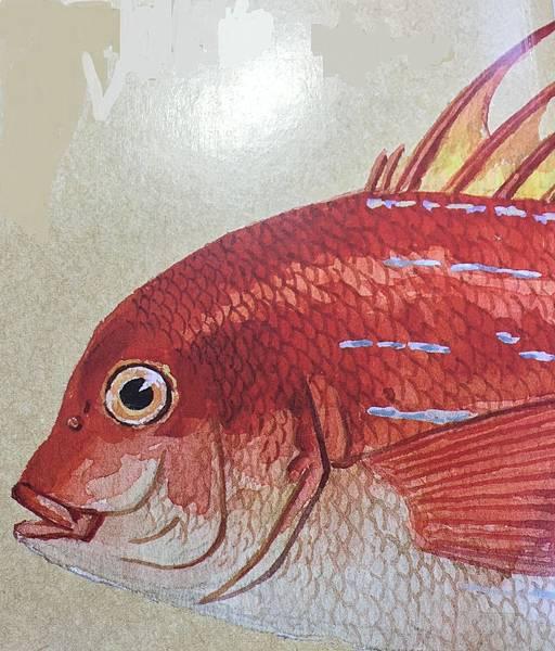鱻事一籮筐:說魚道蝦魚達人愛講五四三