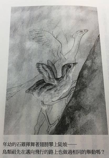 羽的奇蹟﹍石雞