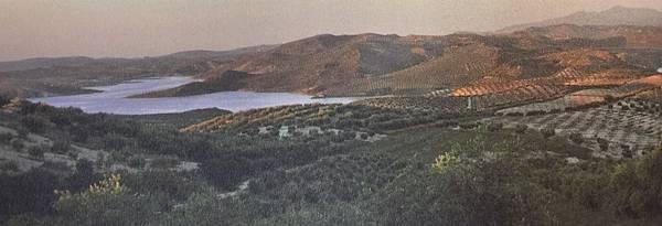 西班牙安達盧西亞的橄欖園