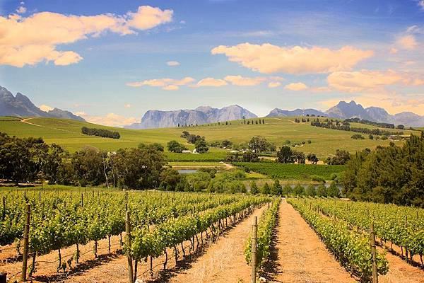 Kapstaden.-Stellenbosch-Vineyard