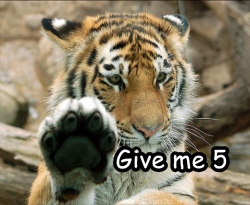 Cats-Want-High-Five-Too-21