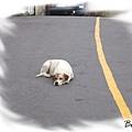 睡在路上的狗