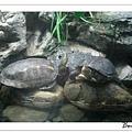 被點穴的烏龜