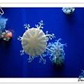 美麗的水母