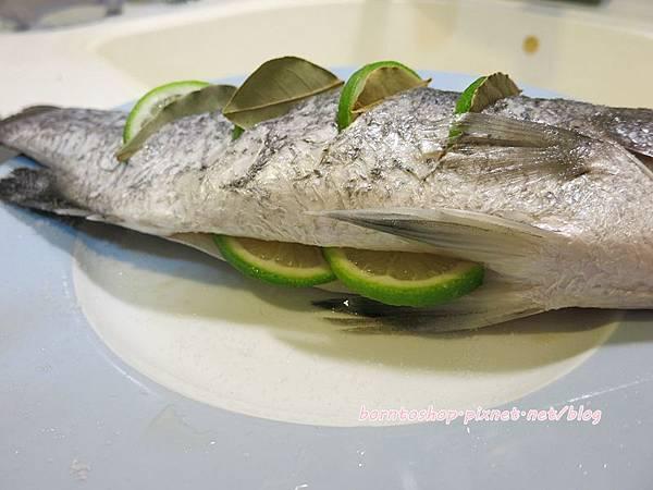 澳洲尖吻海鱸魚