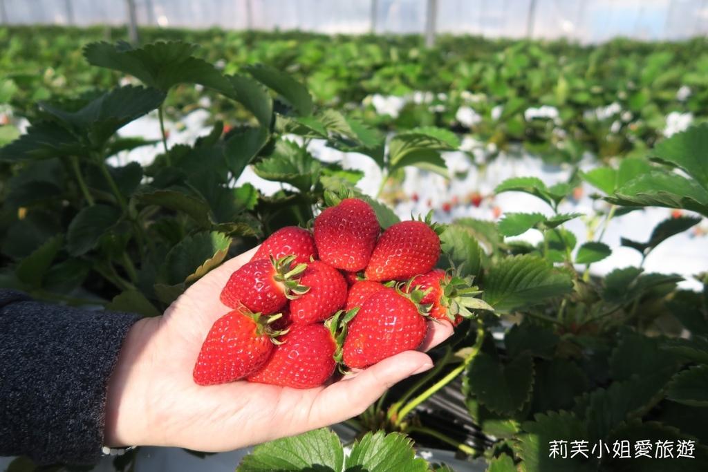 大洗採草莓
