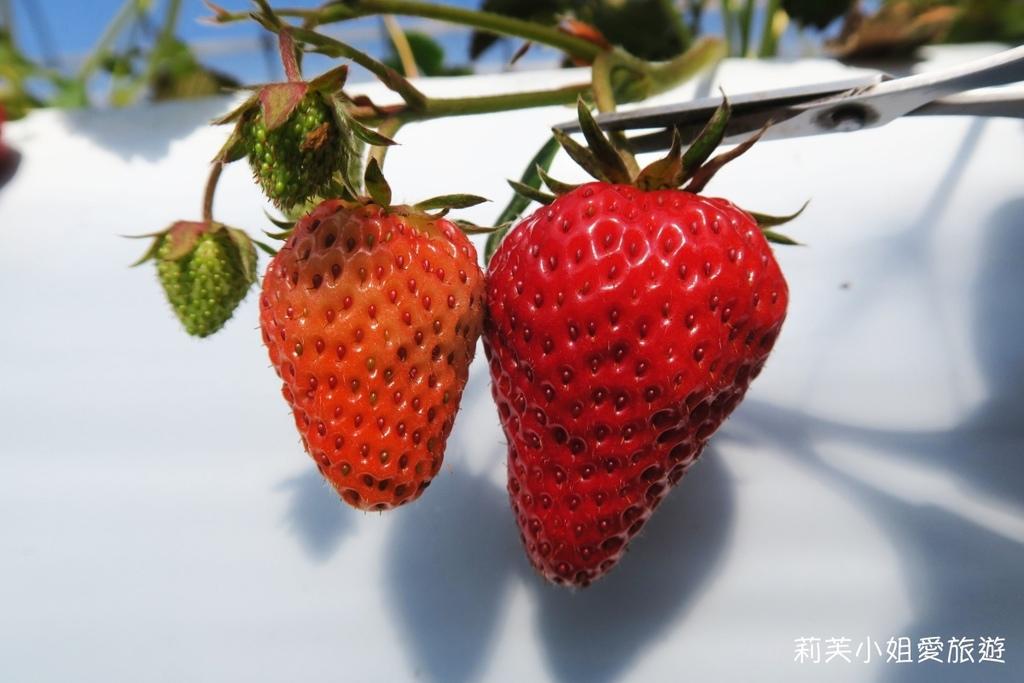 Oarai berry