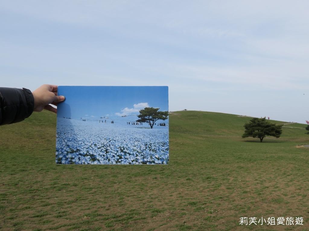 常陸海濱公園