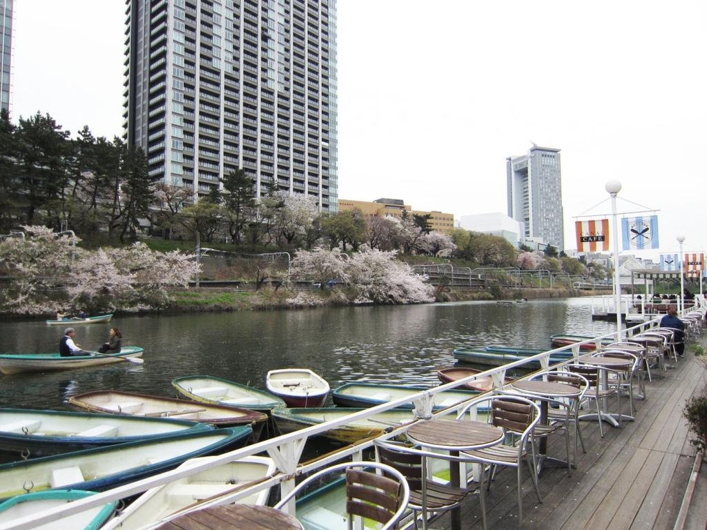 飯田橋櫻花