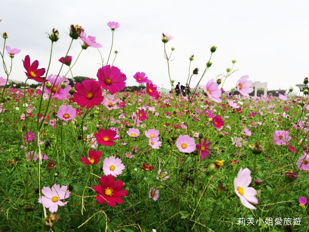 桃園花彩節