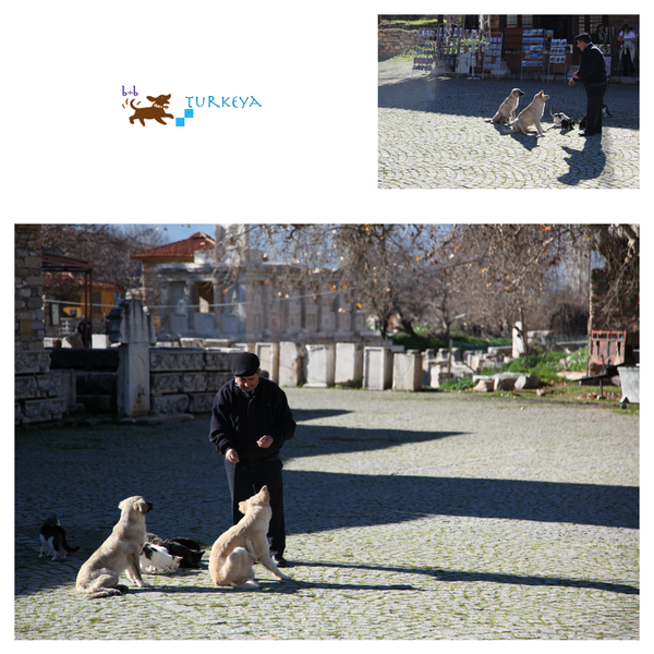 Dogs_in_Turkey_08.png