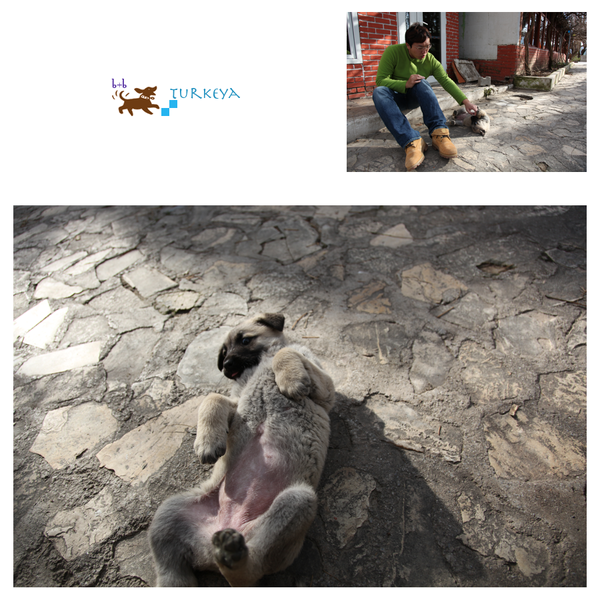 Dogs_in_Turkey_15.png