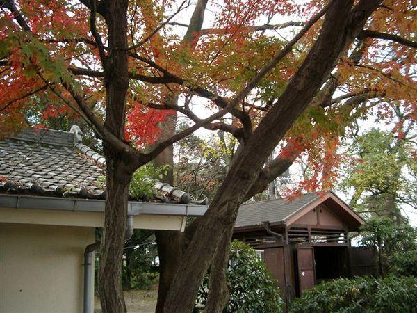 大阪城楓紅.JPG