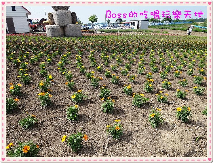 DSC03954.jpg