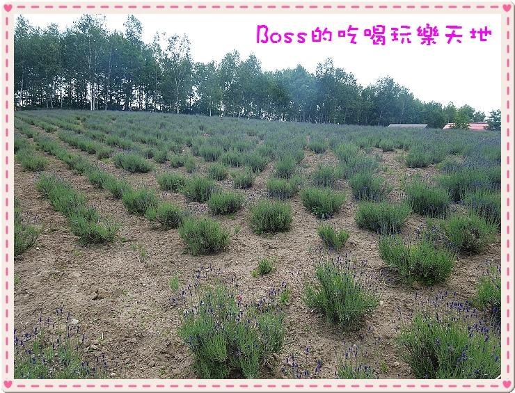 DSC03961.jpg