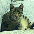 貓兒子 001.jpg