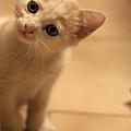 貓兒子 015.jpg