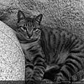 貓兒子 019.jpg