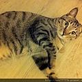貓兒子 025.jpg