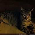 貓兒子 031.jpg