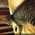 貓兒子 036.jpg