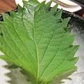 多多亞日式燒烤 033.jpg