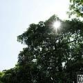 秋紅谷的大太陽.jpg