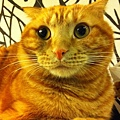 貓兒子 014.jpg