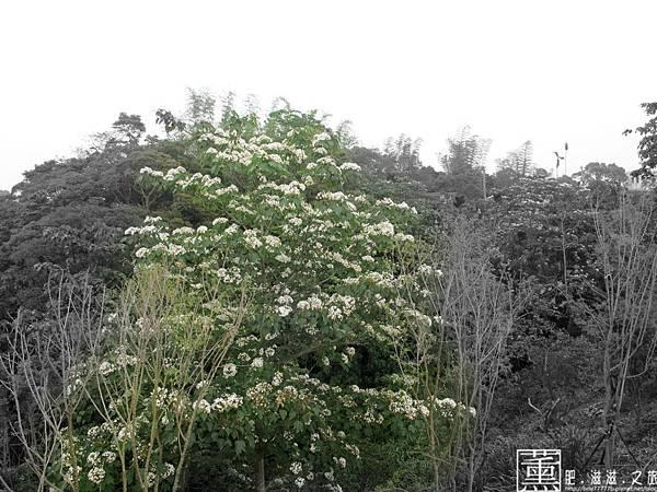南投 微光森林 016.jpg