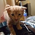 貓金A照片 005.jpg