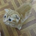 貓金A照片 012.jpg