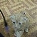 貓金A照片 013.jpg