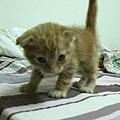 貓金A照片 015.jpg